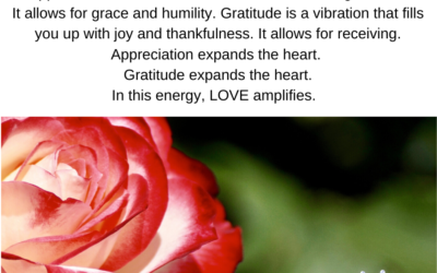 Allow appreciation and gratitude to be your companions